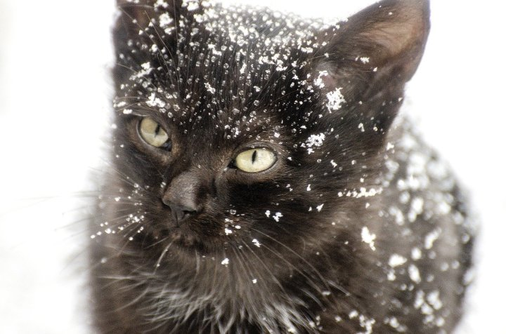 Cold, Cat