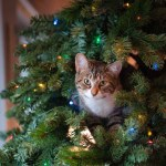 tabby cat on green christmas tree