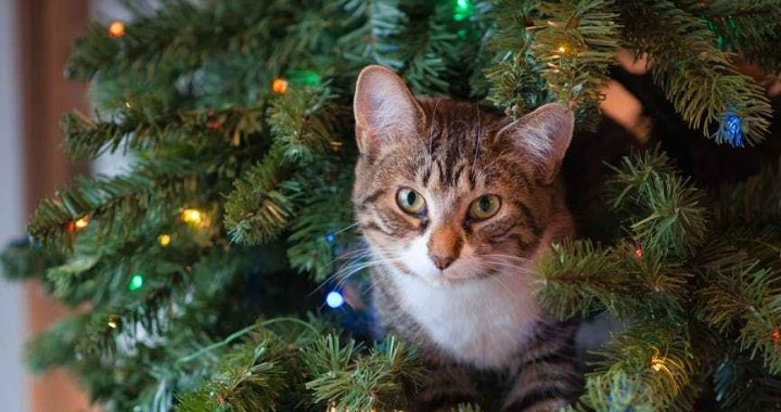 tabby cat on green christmas tree