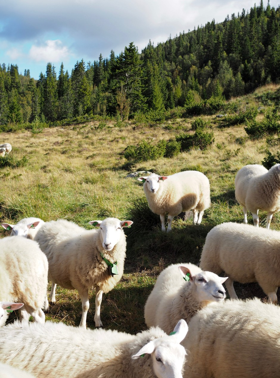 A Norwegian Seter {Mountain Farm Life & Food}