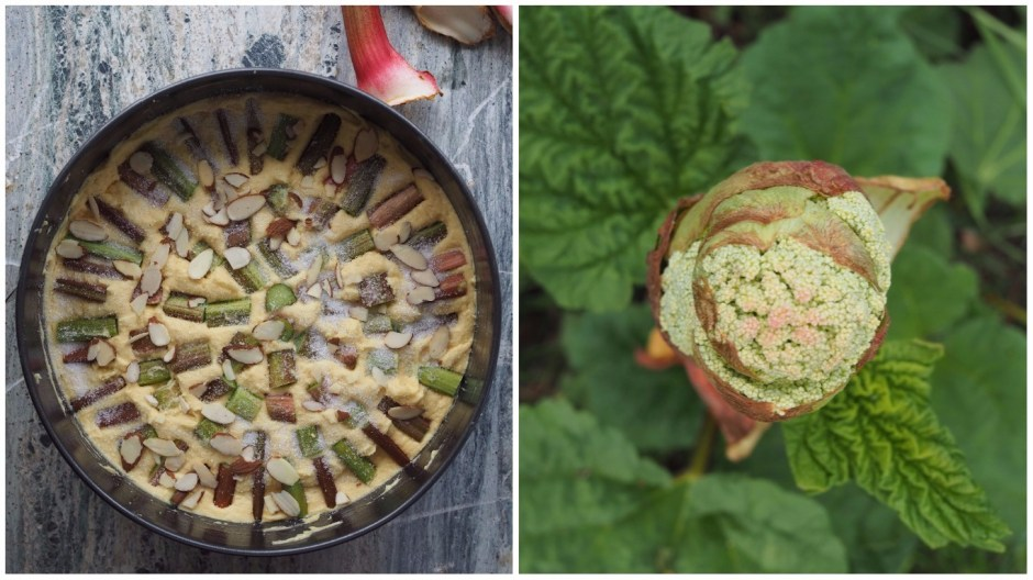 Simple Norwegian Rhubarb Cake (Rabarbrakake)
