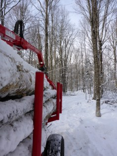 Forwarding firewood from a small-scale improvement harvest in the Spitzer Forest