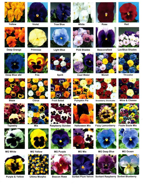 list of fall flowers  flower, Beautiful flower