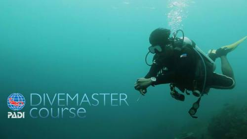 dive-master-course