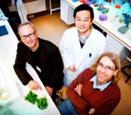 COOPERATION: In a cooperative effort between the clinical unit at Stavanger University Hospital and the molecular biological experts at the University of Stavanger the researchers will now use plants to gain an understanding of Parkinson's disease. From left: Professor Jan Petter Larsen, Senior Researcher Xiang Ming Xu, Professor Simon G. Møller.
