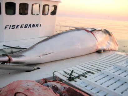 Photo: fiskeri.no/H.P.Tysnes