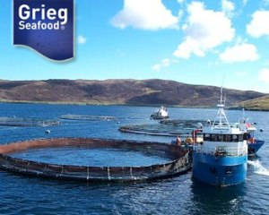 Grieg Seafood has salmon farming operations in Norway, Canada and the UK, in the Shetland Islands. (Photo: Grieg Seafood ASA)