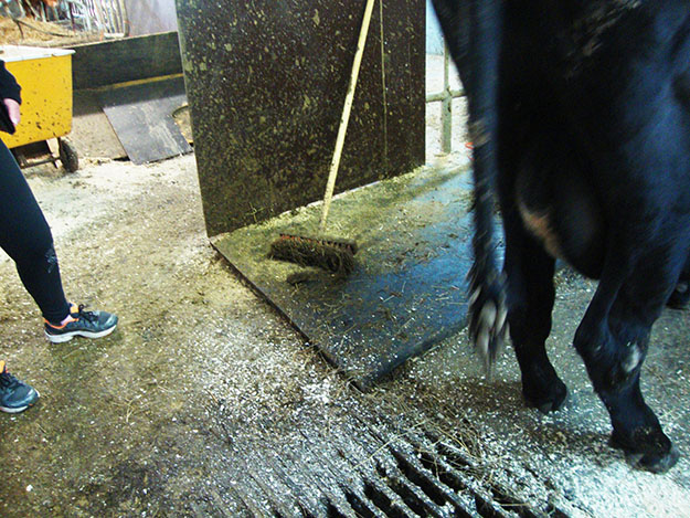 Photo: Christine Foster Meloni What luxury! Farmers clean the rubber mattresses while the cows take it easy.