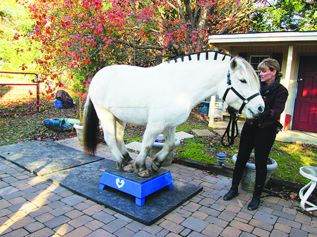 Photo: Christine Foster Meloni Owner Karen Keith asks Fia to show off her trick, standing with all four feet on a small platform. She never makes her horses perform if they aren't in the mood, but luckily Fia was.