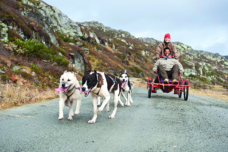 Photo: Terje Rakke  Nordic Life AS / Visitnorway.com Lack of snow is no obstacle to learning to drive a dogsled in Beitostølen—which makes it a perfect vacation for those who want to try it but don't love the cold.