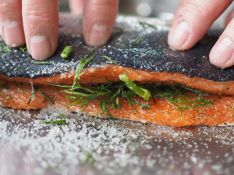 Salmon being cured with salt and dill to make gravlax.