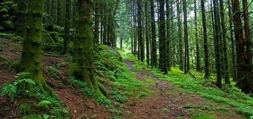 Norwegian forests