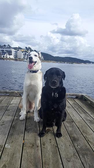 Mona Olsen dogs