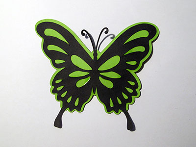 Que de papillons !