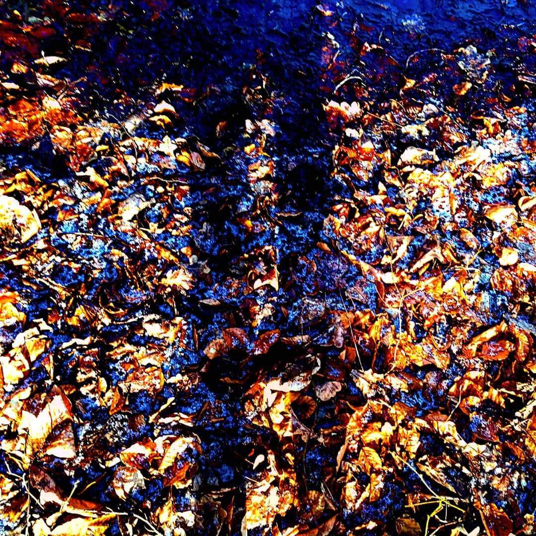 shadows frozen frost leaves sun winterindenmark winter colors motiveseverywhere lookforithellip