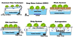 6 Different Types Of Hydroponic Systems