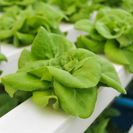 NFT hydroponics
