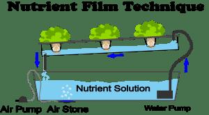 What Is Nutrient Film Technique- NFT Hydroponics?