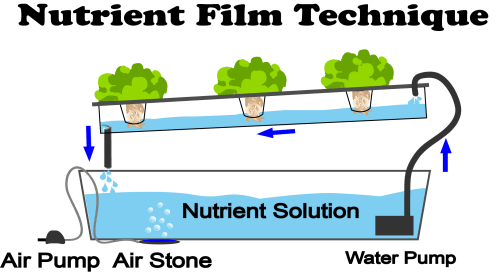 nutrient film technique hydroponics