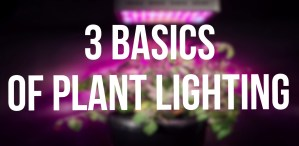The 3 Basics of Plant Lighting
