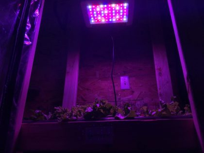 MarsHydro 300 watt LED grow light
