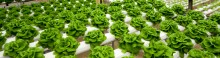 9 Advantages Of Hydroponic Gardening