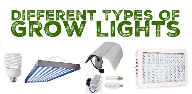 Different types of grow lights for hydroponics
