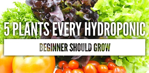 5 Plants Every Hydroponic Beginner Should Grow