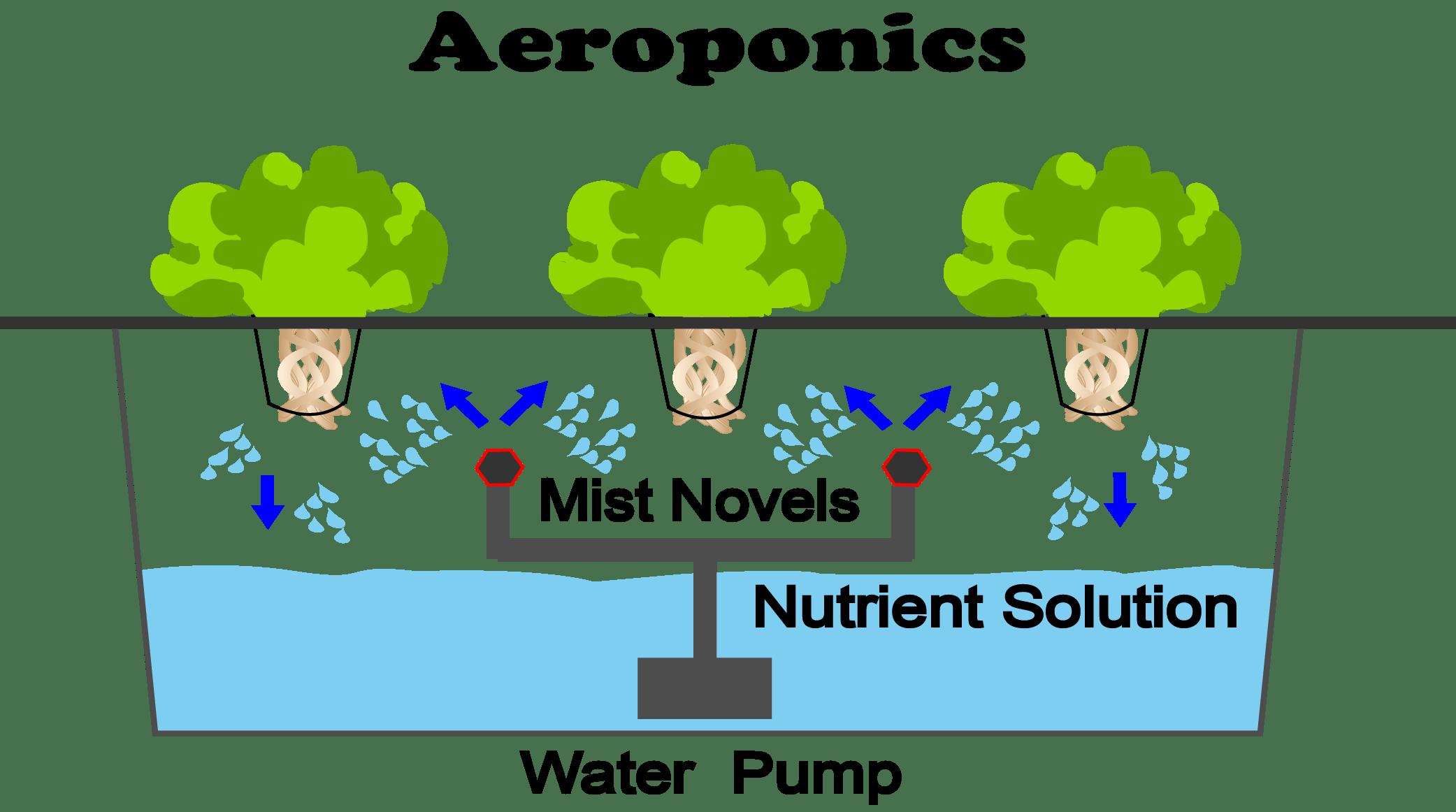 Aeroponics (Hydroponic System)
