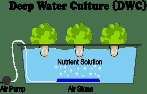 DWC hydroponic system