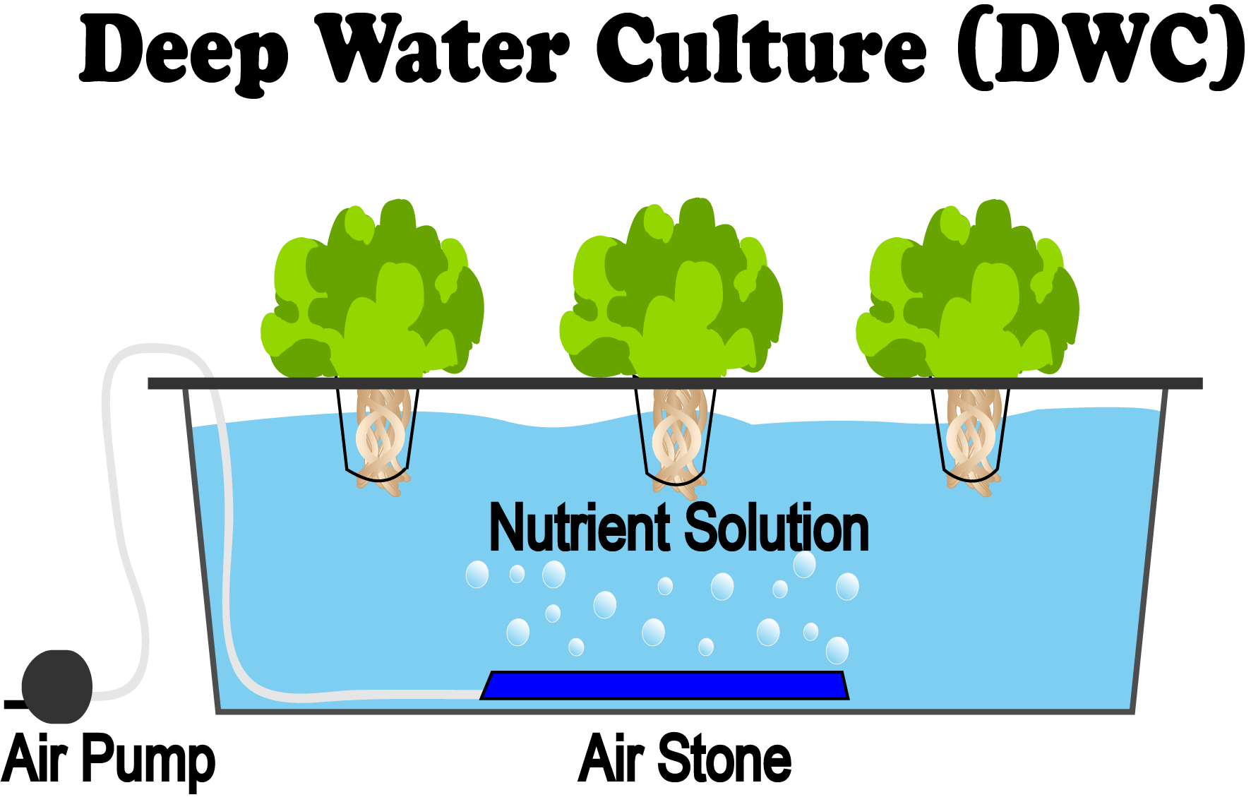 Deep Water Culture (DWC) Hydroponic Method