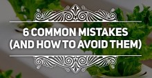6 Common Mistakes By Beginners To Hydroponics