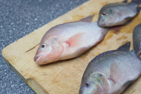 fish for aquaponic system