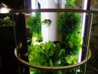 5 Things To Consider Before Buying A Hydroponic System