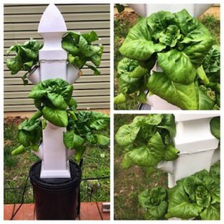 Vertical Hydroponic Tower Gardening