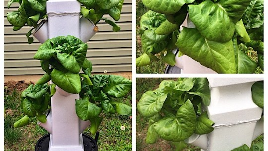 small vertical hydroponic system growing lettuce