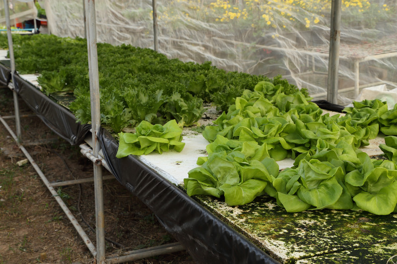 10 Problems Hydro Gardeners Face And How To Solve Them