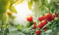 Simple Guide To Indoor Grow Light Spectrum & Color Temperature