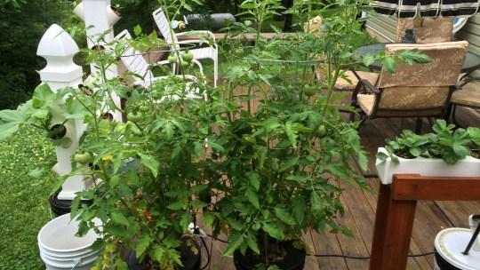 Outdoor hydroponic gardening
