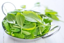 How To Grow Fresh Hydroponic Spinach