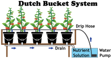 The Dutch Bucket Hydroponic System