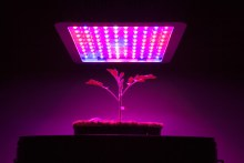 How To Choose The Right LED Grow Light For Your Hydroponic Garden