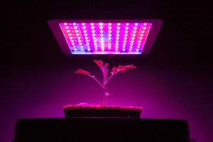 How To Choose The BEST LED Grow Light For Your Hydroponic Garden
