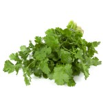 How To Grow Zesty Hydroponic Cilantro