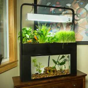 Aquasprouts Aquaponic Garden Review