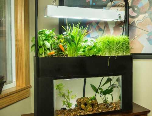 Aquasprouts Aquaponic Garden Review
