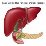 Hígado graso y obesidad. Por qué es difícil perder peso