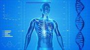 Huesos anchos y complexión: ¿Cuál es mi complexión? ¿Pequeña, mediana o grande?