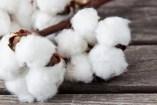 Dieta del Algodón: riesgos y consecuencias de esta dieta tan peligrosa