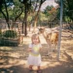 Austin Zoo 35mm Film Photography